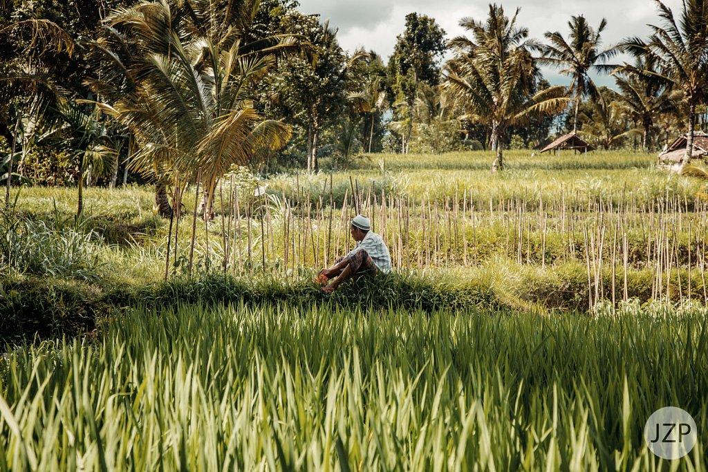 Bauer auf Reisfeld auf Lombok